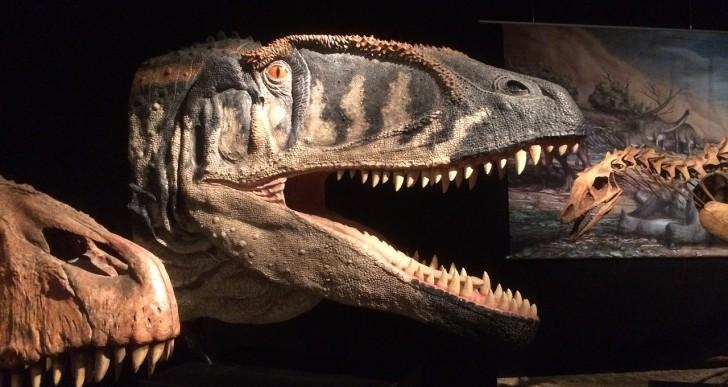 Le Museum d'histoire naturelle d'Autun, un lieu à découvrir absolument