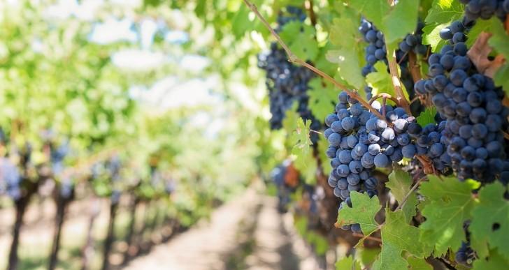 La Fête des Grands Vins de Bourgogne, c'est ce week-end !